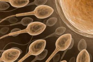 sperma and ovum